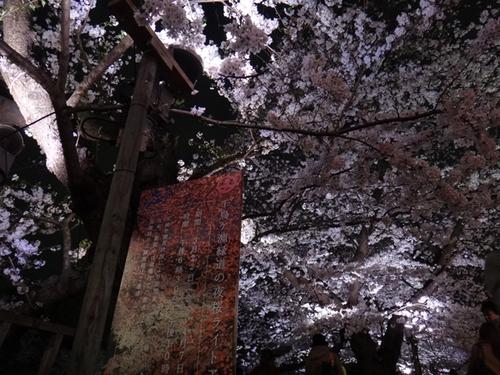 sakura2013-002.jpg