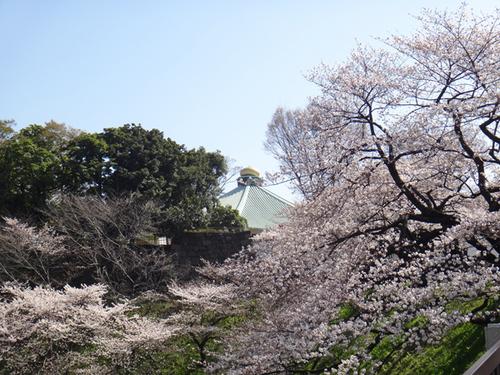 sakura2013-009.jpg